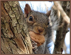 resourceful-squirel-hot-flash-photography